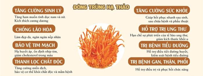 Đông trùng hạ thảo cao cấp hộp 45g sấy khô của Hàn Quốc 3